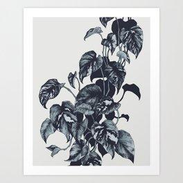 Pothos Art Print
