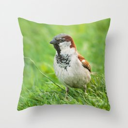 Male House Sparrow Throw Pillow