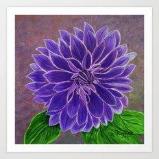 Purple Dahlia  Art Print