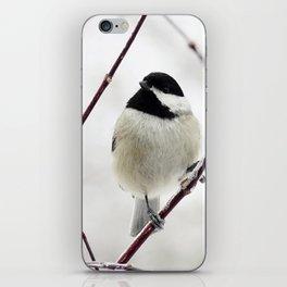Chicka Chickadee iPhone Skin