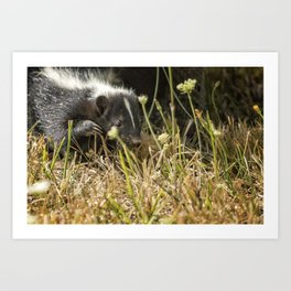 Release of a Young Skunk Art Print