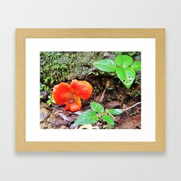 Wild and Red Framed Art Print