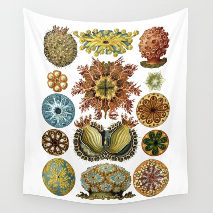 Ernst Haeckel Ascidiae Sea Squirts White Background Wall Tapestry