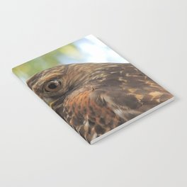 Young Red-Shouldered Hawk in a Desert Willow Notebook