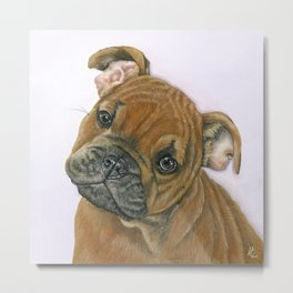 Belle The Baby Bulldog Metal Print