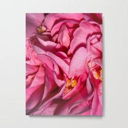 Camellia Close Metal Print