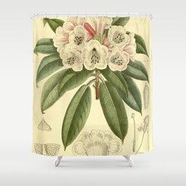 Rhododendron monosematum 1916 Shower Curtain