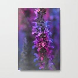Purple Rain Of Purple Salvia Flowers Metal Print