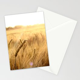 Golden wheat in the sunset Stationery Cards