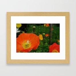 Flower Power. Framed Art Print