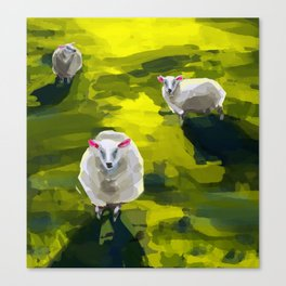 Three Sheep in Field Canvas Print
