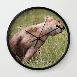 Silly lion cub Wall Clock