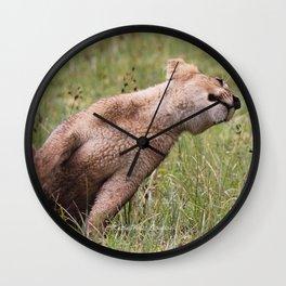 Silly lion cub Wall Clock