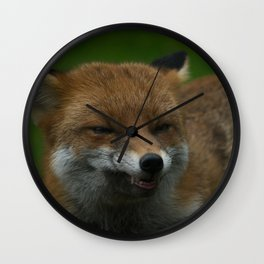 Wild Red Fox Showing Its Teeth Wall Clock