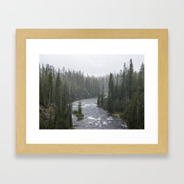 Yellowstone Forest - Nature Photography Framed Art Print