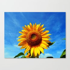 Stunning Sunflower Canvas Print