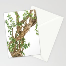 Twisting woods Stationery Cards