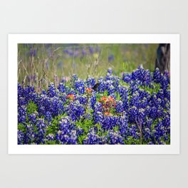 Butterfly and Bluebonnets Art Print