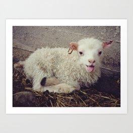 Sheep #5 Art Print