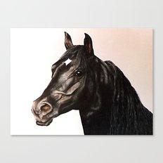 Black Stallion painting Canvas Print