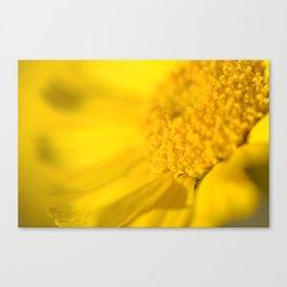 yellow yellow Canvas Print