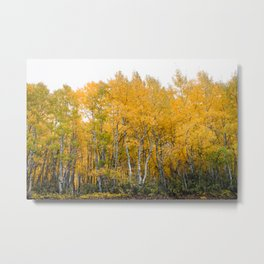 Fall Color in the Sierras Metal Print