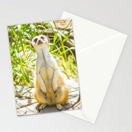Hey Meerkat! Stationery Cards