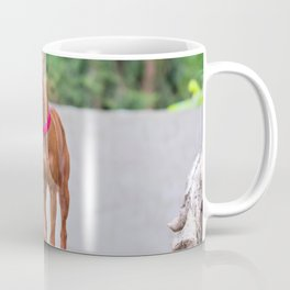 Outdoor portrait of a red miniature pinscher dog with wall behind Coffee Mug