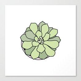 Green suculent Canvas Print