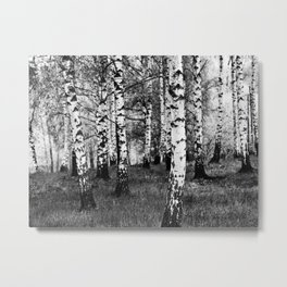 Birches 1 Metal Print