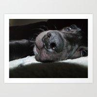 puppy nose Art Print