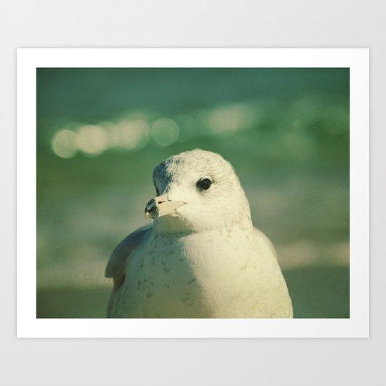 Seagull Close Up Art Print
