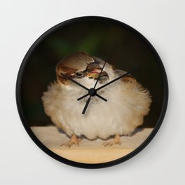 Hungry House Sparrow Wall Clock