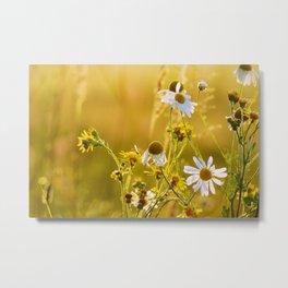 golden field of daisies Metal Print