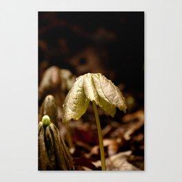 Natures Little Umbrella  Canvas Print