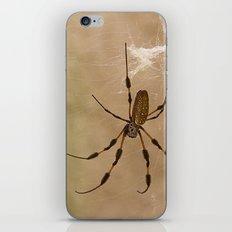 Florida banana Spider iPhone & iPod Skin