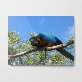 Macaw 2 Metal Print