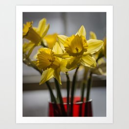Daffodils in Red Crystal vase from my photography collection Art Print