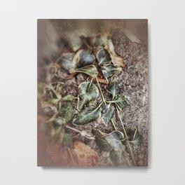 Winter Bedecked with Ivy Metal Print