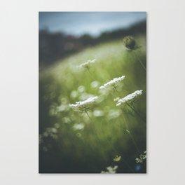 Wild carrot flowers Canvas Print