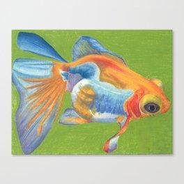 Telescope Eyed Goldfish Canvas Print