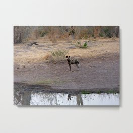 A Rare Encounter  Metal Print
