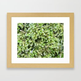 TEXTURES -- Moss on a Tree Trunk Framed Art Print