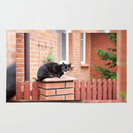 lonely stray black cat sitting Rug