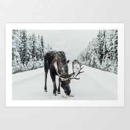 Moose in the wild Art Print