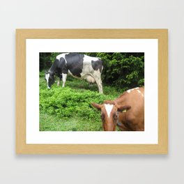 Cows 1 Framed Art Print