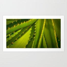 Aloe Arborescens Art Print