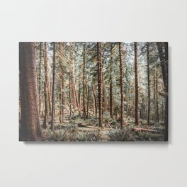 Oregon Coast Magical Forest | Landscape in the PNW | Photography Metal Print