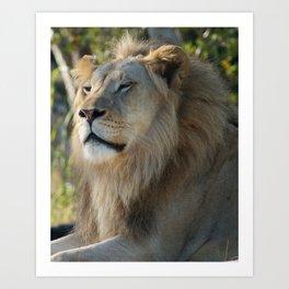 Sleepy Lion Art Print