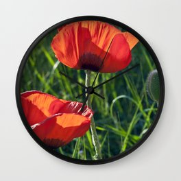 Red Poppies on the summer meadow Wall Clock